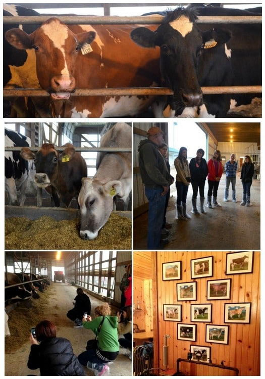 Richman Farms collage 2