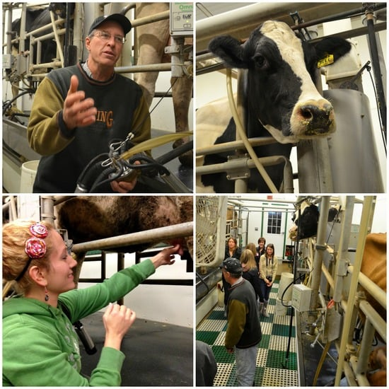 Richman Milking Parlor collage
