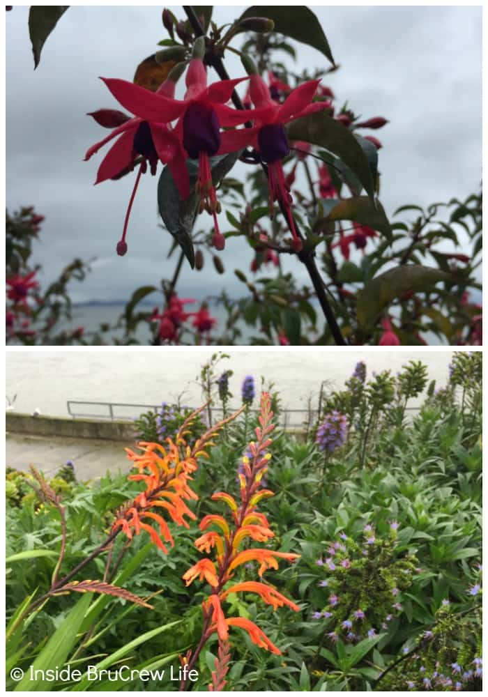 Seven Places to Visit in San Francisco - the flowers and gardens on Alcatraz are a beautiful to see.