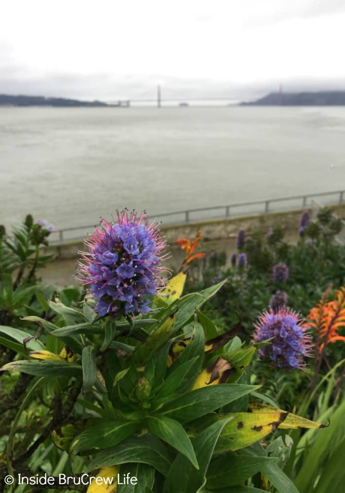 Seven Places to Visit in San Francisco - the views of the bay and city from Alcatraz are gorgeous.
