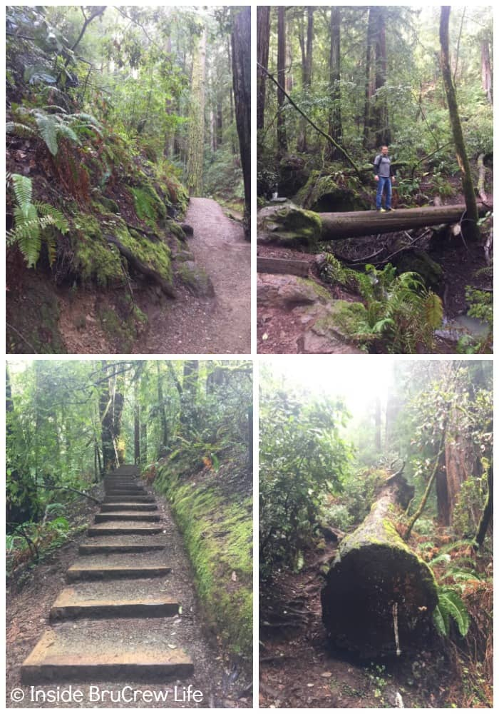 Seven Places to Visit in San Francisco - Muir Woods is 12 miles north of the Golden Gate Bridge and has plenty of trails to hike.