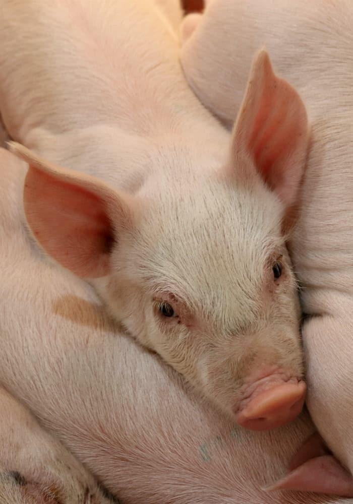 Pass the Pork Tour in Sioux Falls, South Dakota