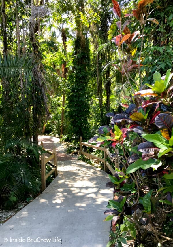 Sarasota Jungle Gardens - 10 acres of tropical jungle gardens and many different varieties of reptiles, birds, and animals can be found in this small Florida attraction. #travel #tropical #jungle #gardens #flamingos #florida #family #floridaattractions