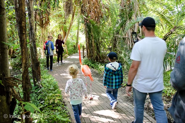 Sarasota Jungle Gardens - enjoy a flamingo encounter in this tropical nature park. The park also features reptiles, birds, and mammals in a beautiful jungle setting. #travel #tropical #jungle #gardens #flamingos #florida #family #floridaattractions