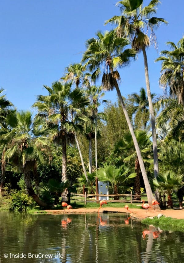 Sarasota Jungle Gardens - see different tropical birds among the trees and plants of this small Florida nature park. #travel #tropical #jungle #gardens #flamingos #florida #family #floridaattractions