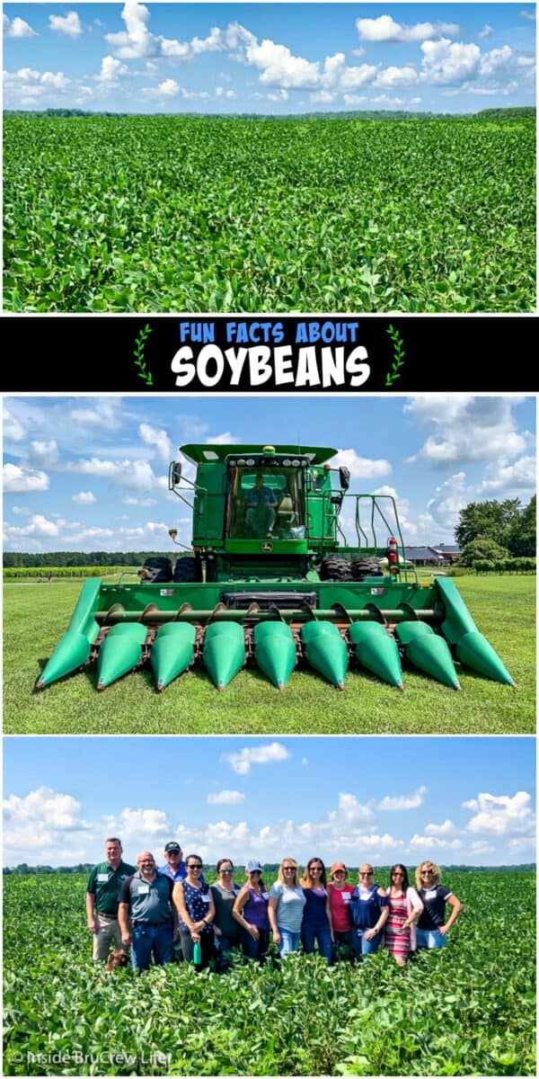 Fun Facts about Soybeans - learn how soybeans are farmed and processed and learn about the health benefits of incorporating soy in your meals.