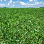 Fun Facts about Soybeans
